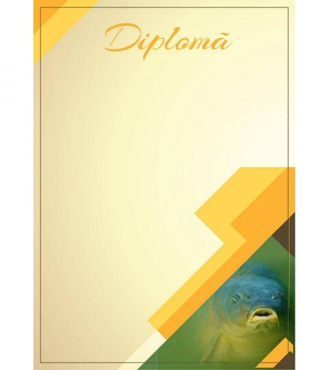 diploma-carton-DIPL06