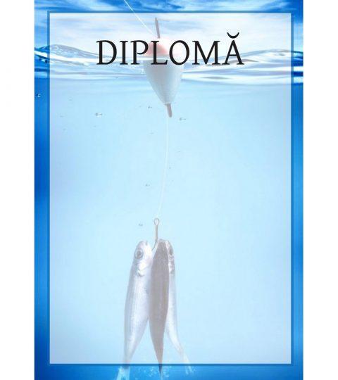 diploma-carton-DIPL20
